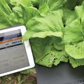 實時收集農業數據:台灣已成功測試 Pre-5G NB-IoT 行動物聯網驗證