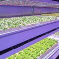 不用土壤和農藥,卒子科技用智能種菜機讓你吃上0污染綠色蔬菜