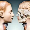 這項 AR 技術將你活生生地「解剖」給別人看