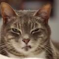 你的貓真的鄙視你嗎?