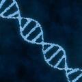 為了增強手臂肌肉,我改變了自己的一段基因