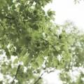 大宁灵石公园:游园模式已开启
