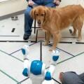 「狗機交互」來了!狗子會聽誰的話?機械人 or 機器狗?