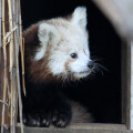 FoxBox 1.0, 讓你在一個小時內不痛安裝 Firefox OS 開發環境的設定工具